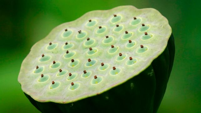 trypophobia meaning