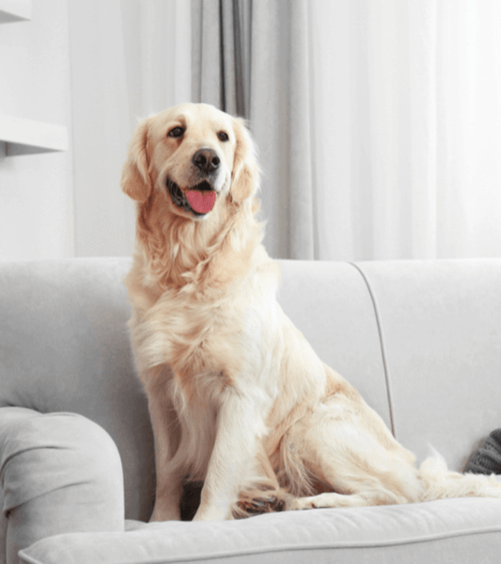 5 Best Ways to Vacuum Your Dog